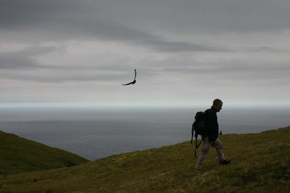 Scottish Wildlife - Skuas on St. Kilda