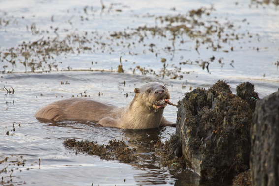 Otter by Graham Uney