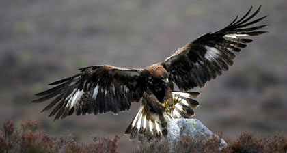 Wildlife holidays in Scotland