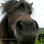shetland-wildlife-walking-14