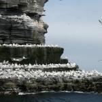 shetland-wildlife-walking-15