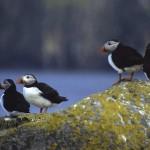 shetland-wildlife-walking-18