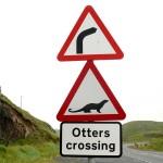shetland-wildlife-walking-3