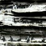 shetland-wildlife-walking-4