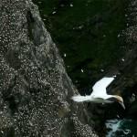 shetland-wildlife-walking-6