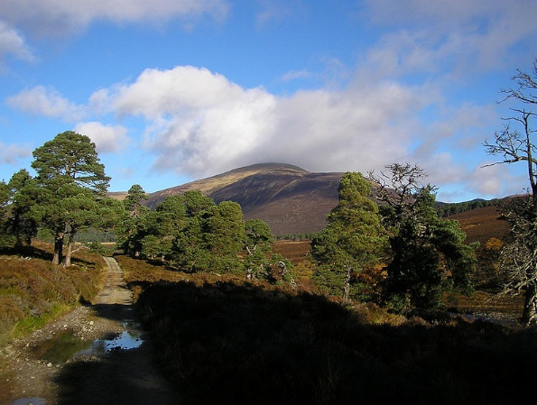 Folklore of Scotland's Trees; Myths and Medicines
