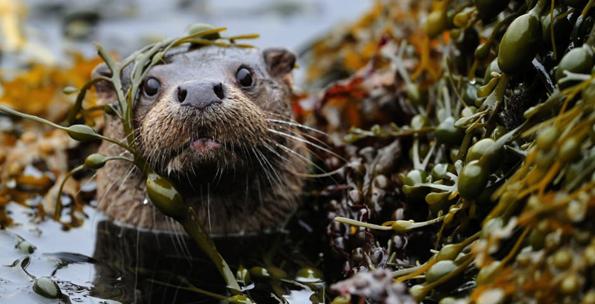 Folkore of Scotland's Wildlife: Behind the 'Big 5'