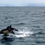 Sailing – Knoydart, Skye & The Small Isles