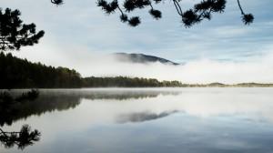 Swirling mists across Loch Garten