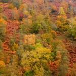 autumn-glens-9