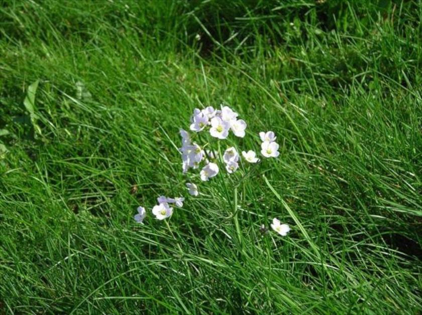 Scottish Flowers in Spring