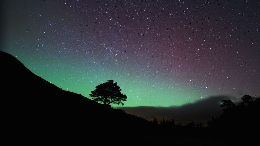 A lone pine stands silhouetted against the Northern Lights Scotland.