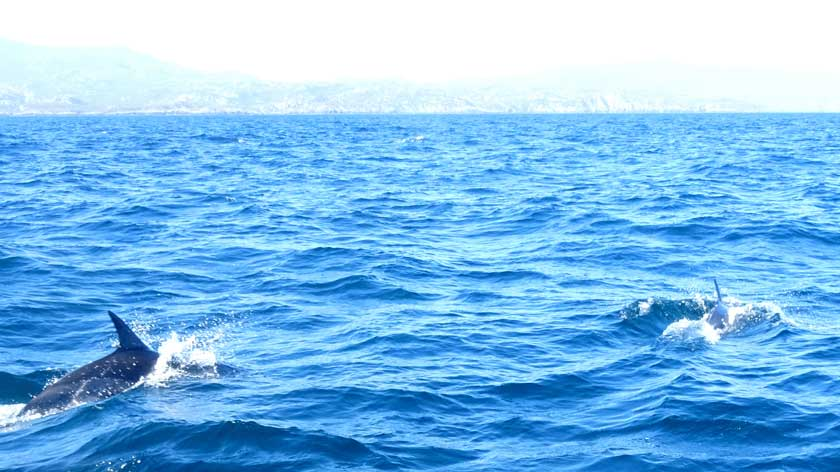 Witnessing Dolphins in the Shaints