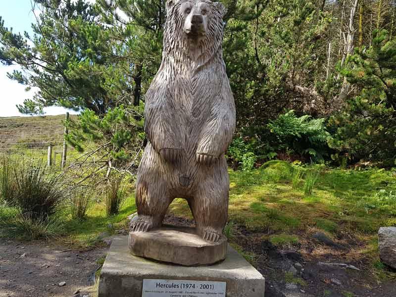 Hercules the Bear