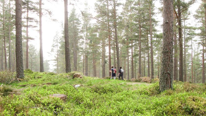 walking holidays scotland self guided