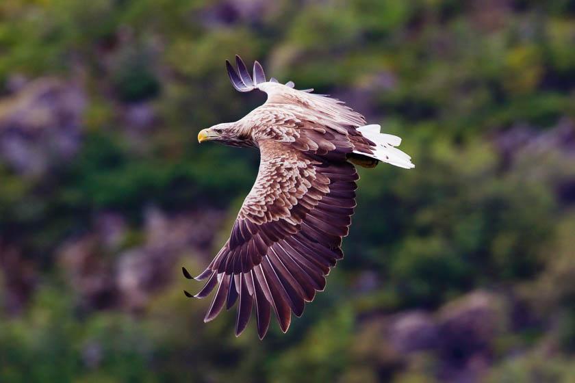 Orkney wildlife