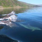 Wildlife Adventure – Mull Staffe and Iona-1-2