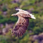 Wildlife Adventure – Mull Staffe and Iona-1-4