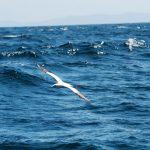 Wildlife Adventure – Mull Staffe and Iona-10
