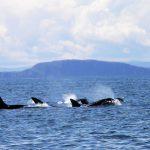 Wildlife Adventure – Mull Staffe and Iona-7