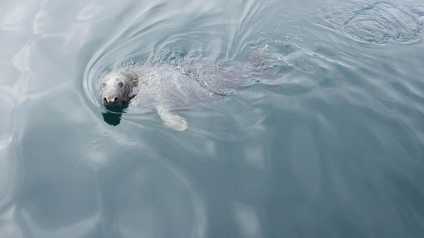 Shetland Photo Blog