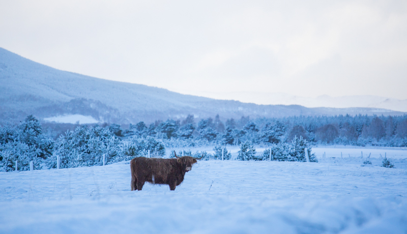 winter highland cozy cairngorms